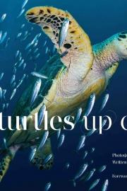 Sea Turtles up Close by Maine writer Jennifer R Nolan